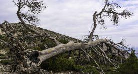 arbre brûlé après feu de forêt