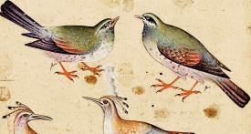 « Le Cantique des oiseaux » d'Attar – Diane de Selliers Editeur