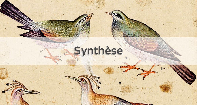 Le Cantique des oiseaux d Attar Diane de Selliers Editeur