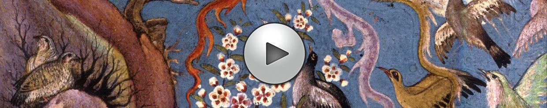 image débuter activité - cantique des oiseaux